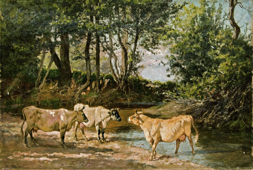 Cows at a Watering Hole