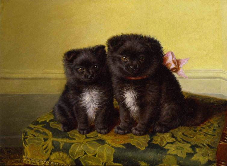 Sitting Pretty (Chow Pups)