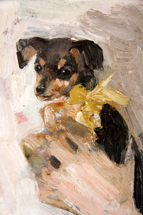 A Dachshund Pup
