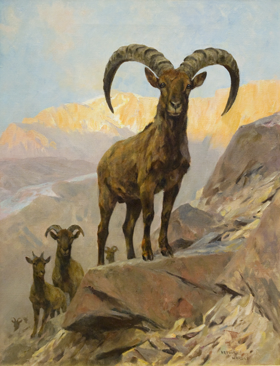 Ibex in a Mountainous Landscape