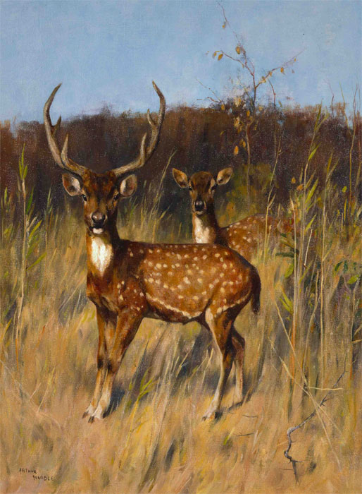 Chital in a Landscape